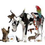 Ποικιλία Προιόντων σε Online Pet shop